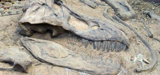 Окаменелости динозавров